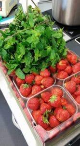 fraise menthe